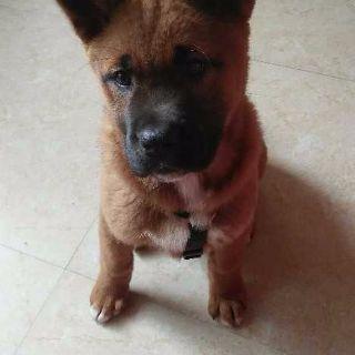 长期出售1-5个月的小狗狗,打过疫苗。